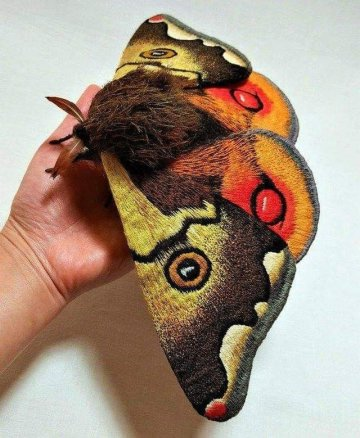 Image about Beautiful Picture Showing Japanese Giant Emperor Moth