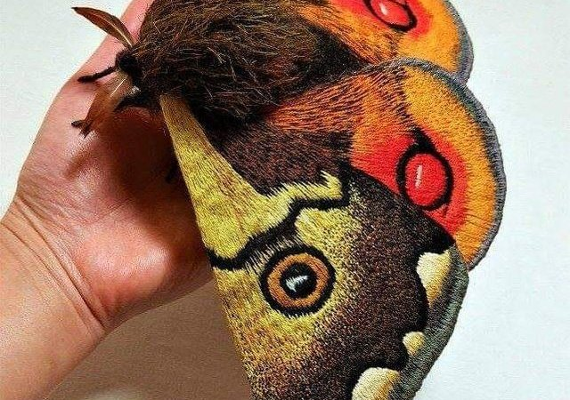 Beautiful Picture Showing Japanese Giant Emperor Moth: Fact Check