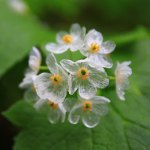 Image of 'Skeleton Flower' Turns Transparent When It Rains