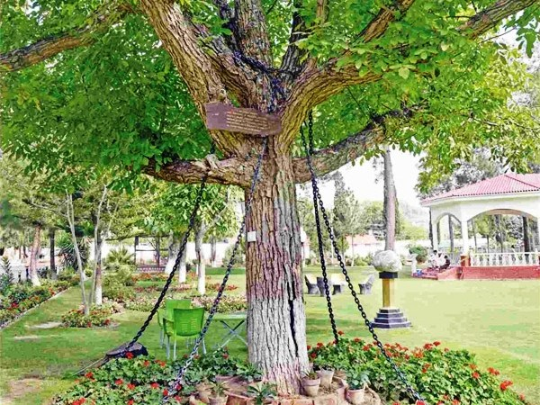 Tree Under Arrest in Pakistan for More than 100 Years: Fact Check