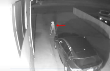 Image about Harry Potter's Dobby Appeared in a Creepy CCTV Footage