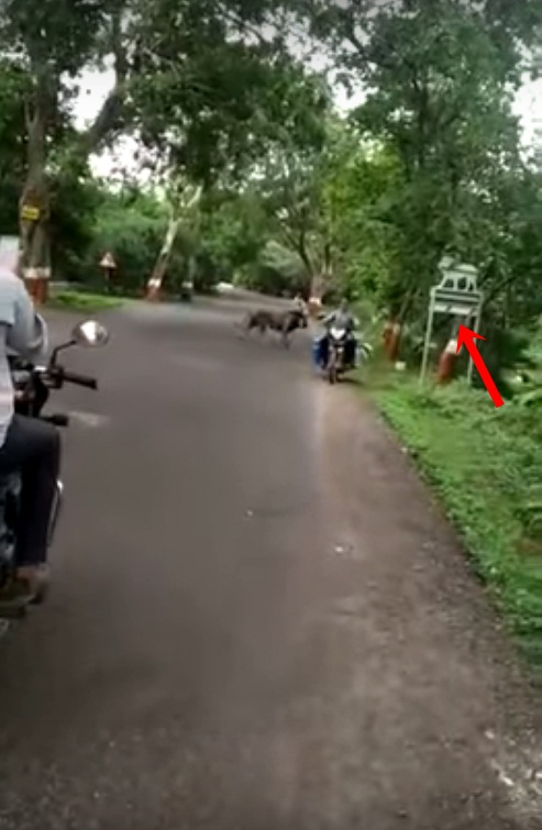 Image about Lion Spotted Roaming Freely on a Mumbai Street, Video