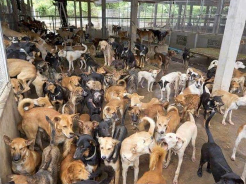Image about Police Raid Found Dog Meat in Some Hotels in India