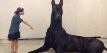 About Amazing Picture of Clifford, the Big Black Dog