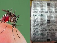 Image about Caripill Papaya Leaf Extract Tablet Cures Dengue in 48 Hours