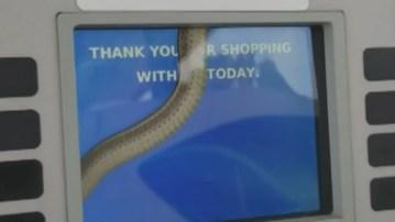Image from Woman Spots Snake Inside Gas Pump Screen, Video