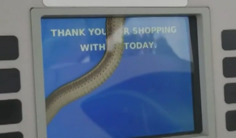 Woman Spots Snake Inside Gas Pump Screen, Video: Fact Check
