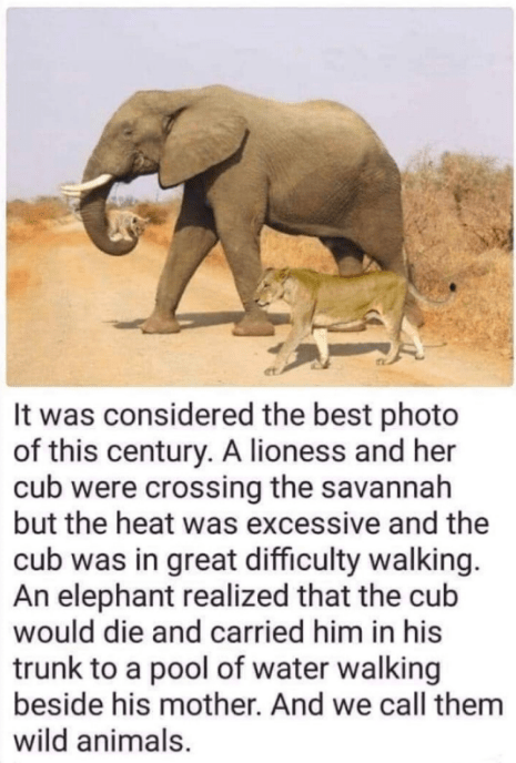 Image about Heartwarming Story of Elephant Carrying a Cub in Trunk