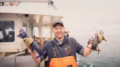 Image about Maine Lobsterman Catches Rare Purple Lobster