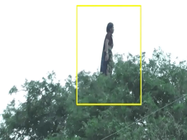 Image of Woman Standing on Tree Top in Madhya Pradesh, India