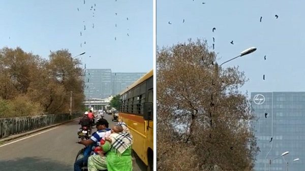 Thousands of Strange Insects Attack Mumbai, People Panic: Fact Check