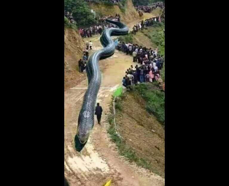 Image about 120-Metre Giant Dragon Jumped Out of Water