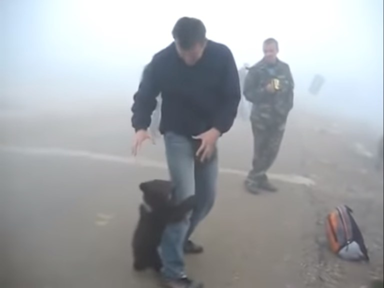 Image about Baby Bear Hugging Rescue Ranger Post Forest Fire