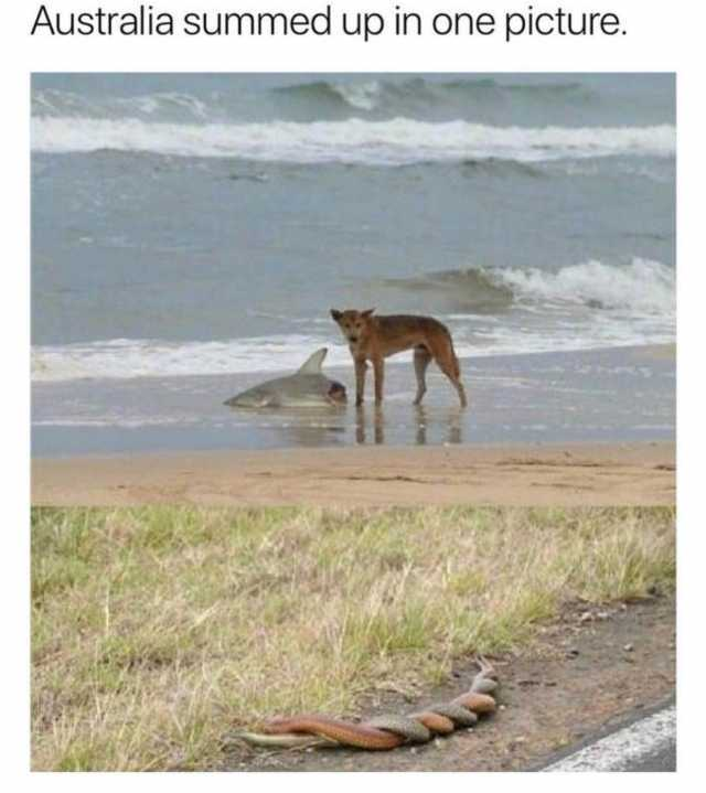 Dog Eating Shark in Australia While Snakes Mate, Photograph