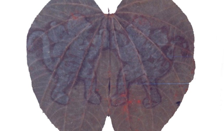 Rare & Holy Hanumadh Beera Leaves in Srisailam Forest: Fact Check