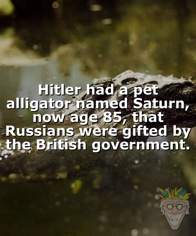 Image about Nazi Leader Adolf Hitler Had a Pet Alligator, Saturn