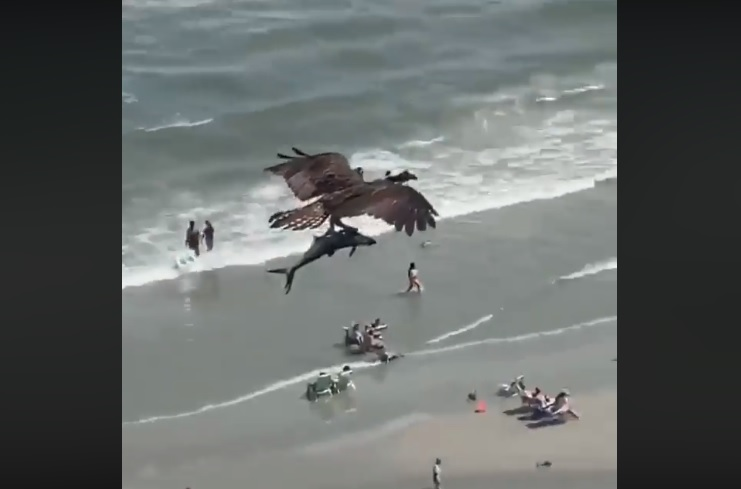 Image about Bird Carrying a Shark Over Ocean, Video