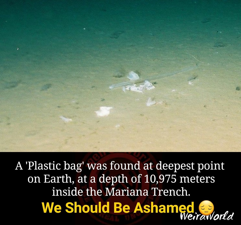 Image about Plastic Bag Found at Deepest Point in Ocean