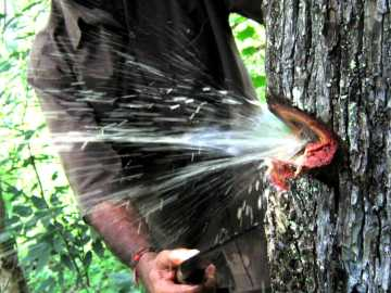 Image of Water Flowing Out of Tree Trunk, Amazing Video
