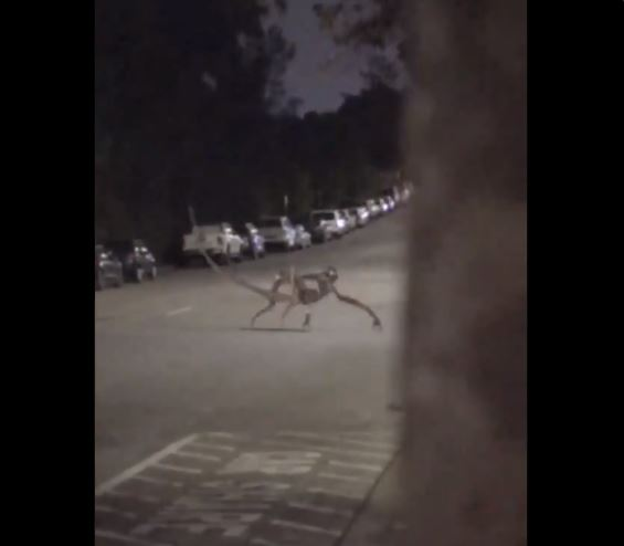 Image about Alien Creature Crossing Road in Idaho, Video