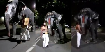 Image about Elephant Talking in Srirangam Temple of Kerala
