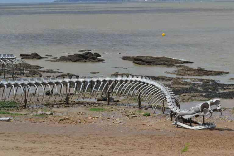 Image of Giant Sea Serpent Skeleton Found on a Beach