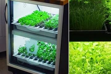 Urban Cultivator indoor garden