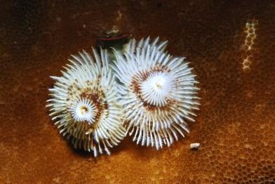 Tauchgang Indien eine faszinierende Unterwasserwelt