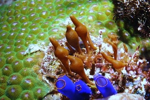 Eine faszinierende bunte Artenvielfalt unter Wasser beim Tauchgang Philippinen entdeckt.