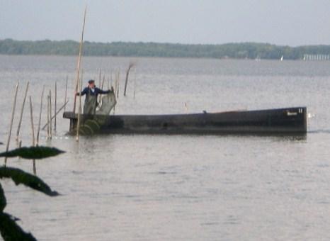 Fischer leert gefangene Aale aus der Reuse am Steinhuder Meer mit dem traditionellen Holzkahn