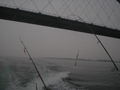 Oft kann man Dorsche direkt unter der Fehmarnbrücke fangen.