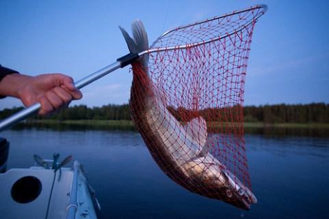 Fischen auf Zander