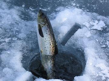 Sind die Forellenseen zugefroren kann man Forellen auch aus einem Eisloch angeln.