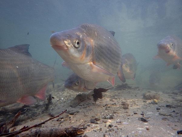 Nase Fisch