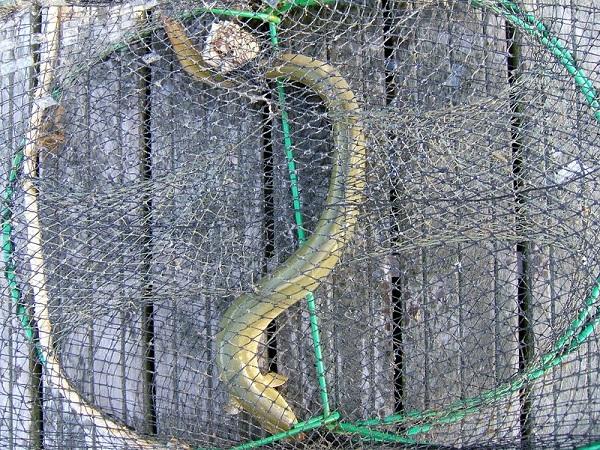 Raubfische angeln