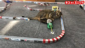 Crazy Japan: Cat vs Kyosho MiniZ - video