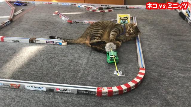 Japan: Cat vs RC Car