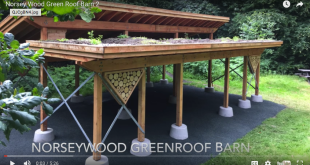 Green roof for chicken coop?