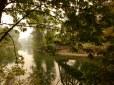 Eery river scene