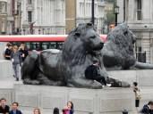 Big ass lions