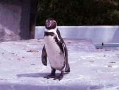 Köln: Zoo und Aquarium