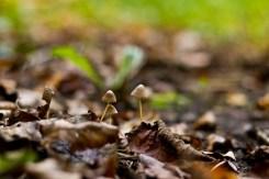 Köln: Waldspaziergang zum Herbstanfang