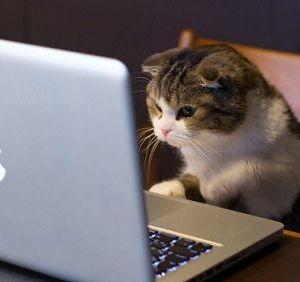 Pourquoi les vidéos d'animaux sont-ils si populaires sur le web ?
