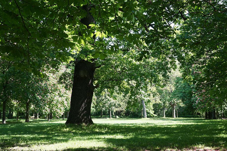 Wiener Prater Sonne und Bäume