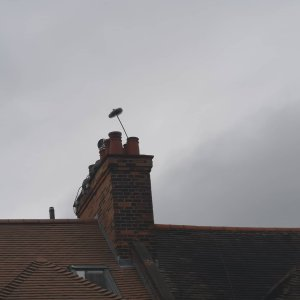 Hodgsons Chimney Sweeps chimney sweeping in Seaton