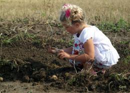 Kind zoekt aardappelen Oogstdag Tiengemeten