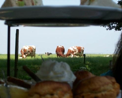vanaf terras uitzicht op de koeien