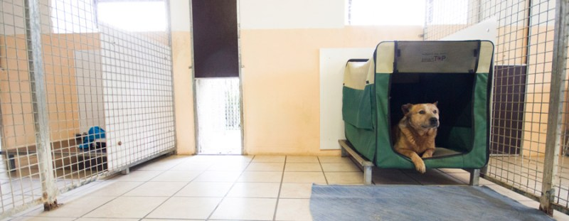 In unserer kleinen Hundepension sind Gäste, gleich welcher Rasse, herzlich willkommen.