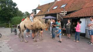 kameel-workshop-feest