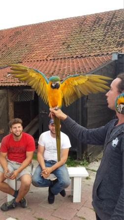 Papegaai vleugels wijd